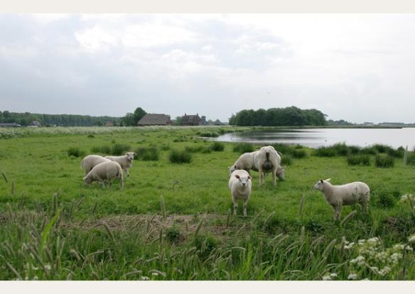 huis_hoeksmeer